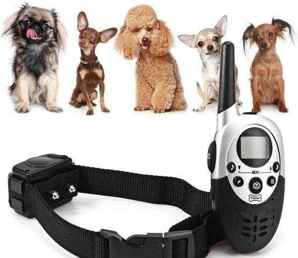 Ошейник с GPS для собак: виды, характеристики и популярные модели